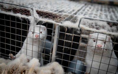 芬兰正在开发动物使用的新冠病毒疫苗
