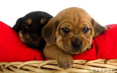 芬兰去年新登记的狗狗数量超过新生婴儿的数量