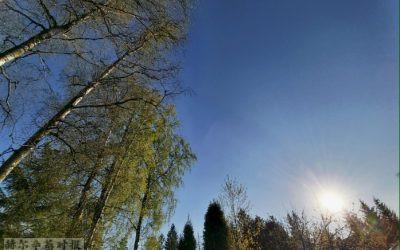 """芬兰的桦树汁:低热量,纯天然,""""革命性的能量饮料"""""""