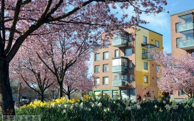 经济学家预测,今年芬兰的房价将上涨3%以上