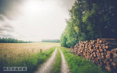 芬兰职场资讯:60%的人希望继续远程工作,芬兰伐木工成为新冠疫情中最受欢迎的职业之一