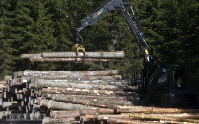 借助卫星成像,芬兰发现的非法伐木数量增加了十倍